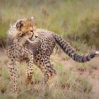 Carefree Cheetah Cub by Owed To Nature