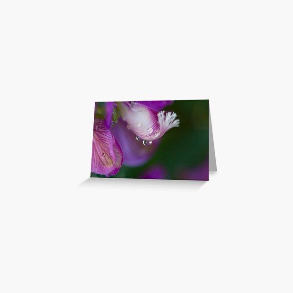 Water Play - Myrtle-leaf Milkwort (Polygala Myrtifolia) Greeting Card