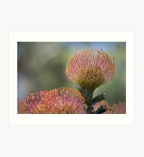 Nodding Pincushions Art Print