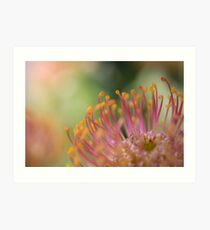 Nodding Pincushion Flower Art Print