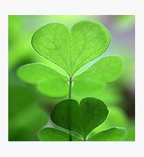 happy saint patrick's day!♣!♣!♣!♣!♣! Photographic Print