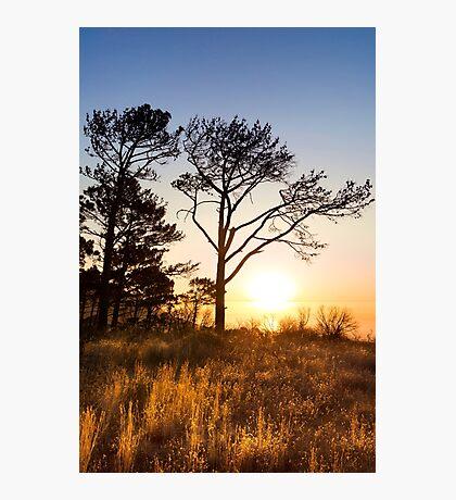 Golden Signal Hill Sunset Photographic Print