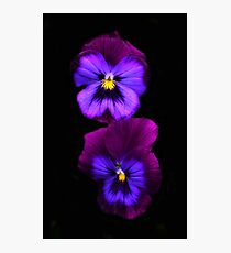 Purple Pansies  Photographic Print