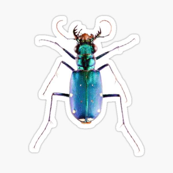 Six-spotted Green Tiger Beetle (Cicindela sexguttata) Sticker