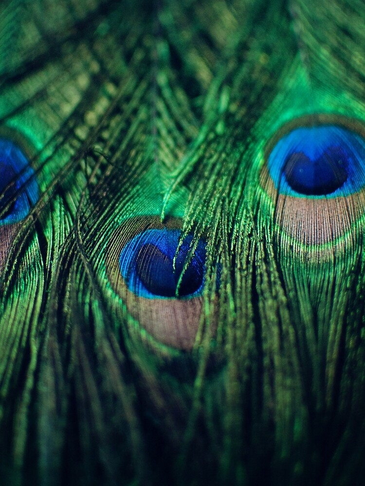 Peacock Feathers by chelseavictoria