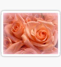 Roses, blushing so tenderly for you. Sticker