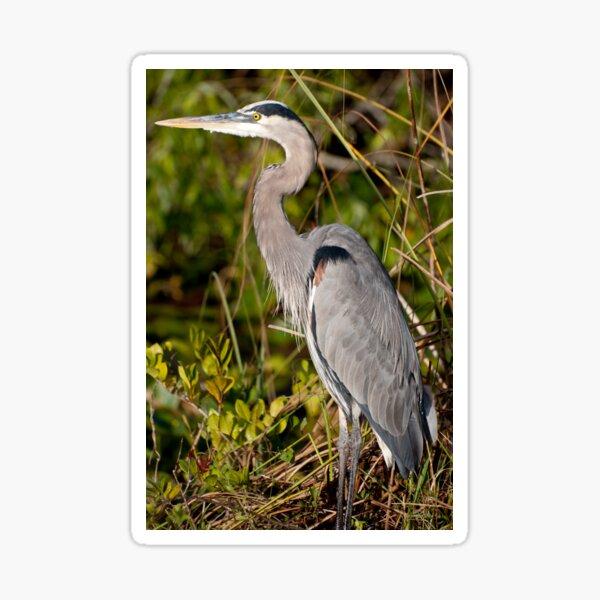 STOCK ~ Great Blue Heron #3 Sticker