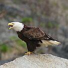 Screamin' Eagle by akaurora