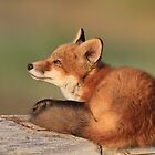 Relaxation (Fox Kit) by akaurora
