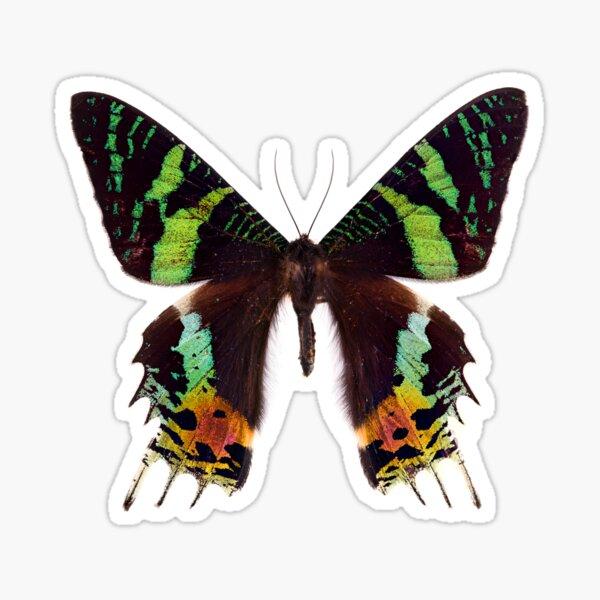 Madagascan sunset moth (Chrysiridia rhipheus) Sticker