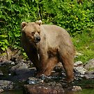 What's Over There (added TO Bear Viewing Story) by akaurora
