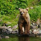 Hi (added To Bear Viewing Story)  by akaurora