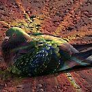 Rainbow Pigeon von BlueMoonRose