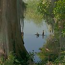 Hardwood Swamp by akaurora