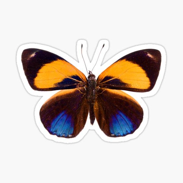 Dotted Glory Butterfly (Asterope markii davisii) Sticker