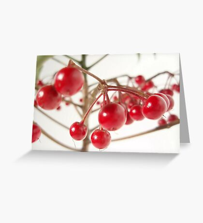 Scarlet Berry Greeting Card
