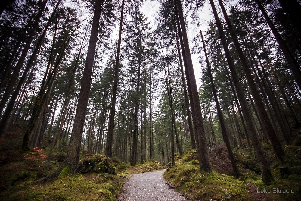Bavarian Alps Path - 2/4 by Luka Skracic