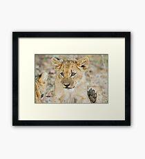 lion cub 2 Framed Print