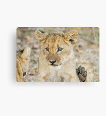 lion cub 2 Canvas Print