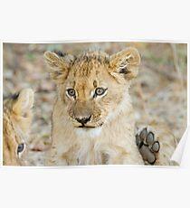 lion cub 2 Poster