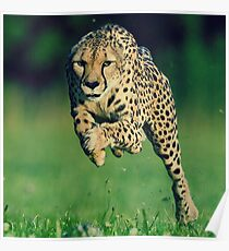 Cheetah Motivation Poster