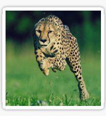 Gepard Motivation Sticker