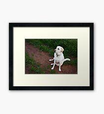 Labrador Dog Framed Print