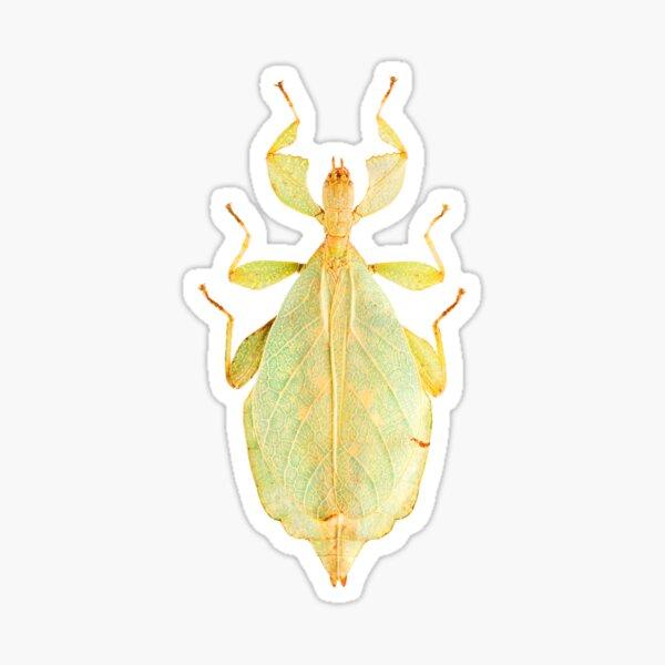 Leaf Insect (Phyllium gardabagusi) Sticker