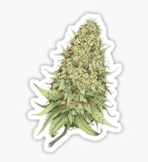 Cannabid Bud Sticker