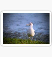 Seagull On The Grass Sticker