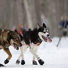 #1 Ceremonial Iditarod Start ~ The Athletes  by akaurora