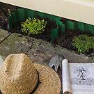 backyard sufficiency by chookshedflambe