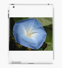 Morning Glory Flower with Dewdrop iPad Case/Skin