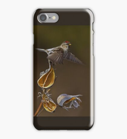 Redpoll Takes Flight iPhone Case/Skin