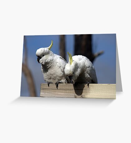 Is there any food for us? Greeting Card
