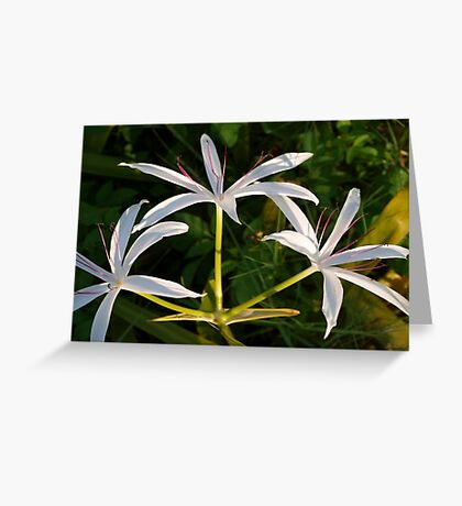 Three lily blooms Greeting Card