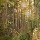 Sun in the woods by DinaZaharieva