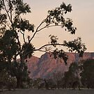 Kangaroos at the Mountain Side by Lorraine McCarthy by Lozzar Landscape
