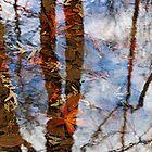 Vernal Pools by Eileen McVey