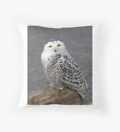 Owl on the Rocks - Snowy Owl Throw Pillow