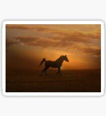Arabian Horse and Sunset Sticker