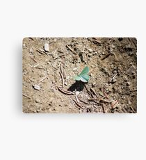 Moth on the Trail Canvas Print