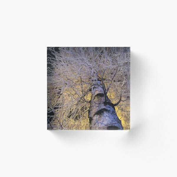 Magical winter Acrylic Block