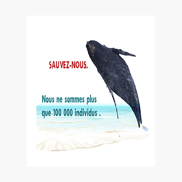 sauvons les baleine Impression photo