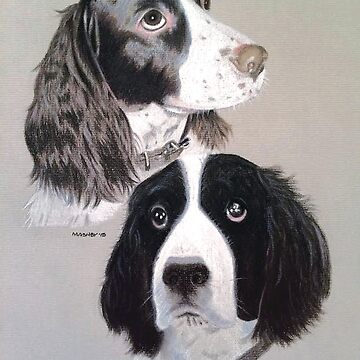 Daisy and Teddi the beautiful English Springer Spaniels  by micheleashby
