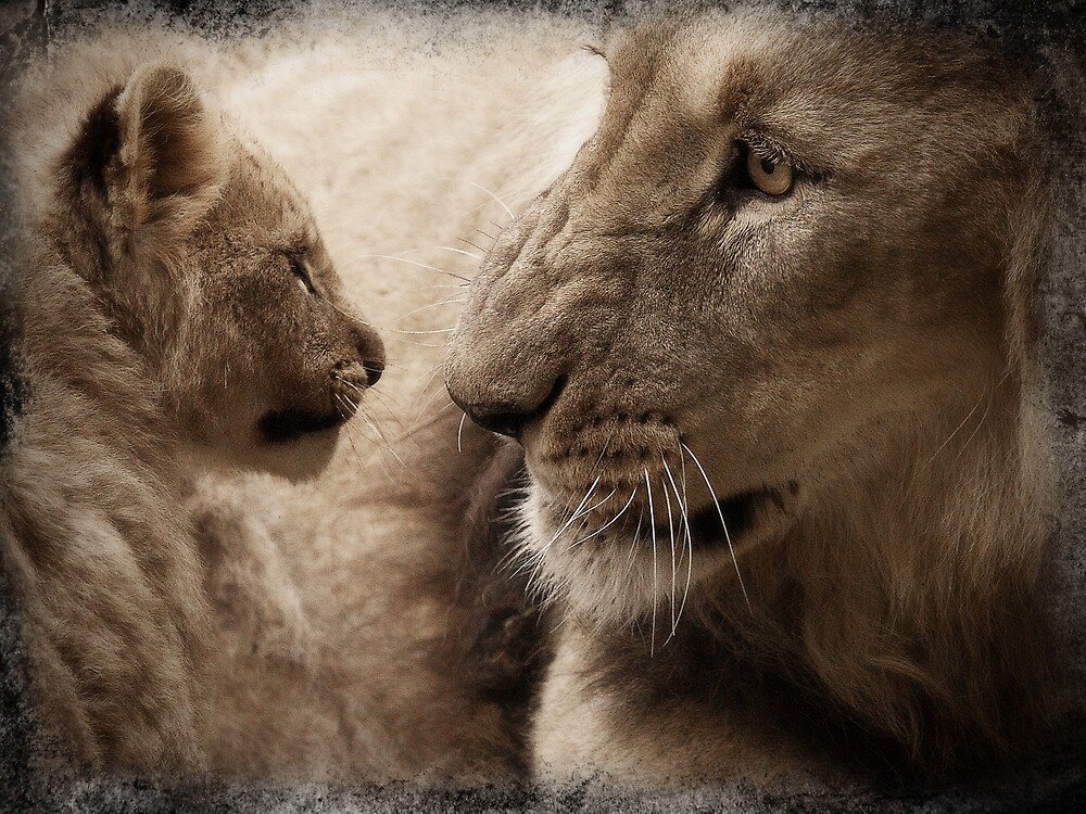 Lion and cub by franceslewis