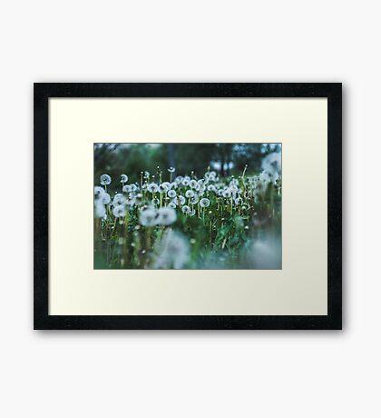 dusky dandelions Framed Print