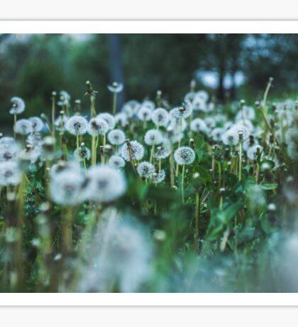 dusky dandelions Sticker