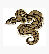 Ball/Royal Python - Spider Morph Photographic Print