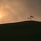 The Lonely Tree by Clayton  Turner